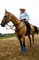 Cómo entrenar a un caballo occidental del placer Con una Bosal