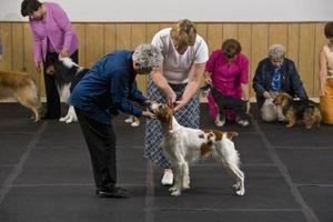 ¿Qué significa cuando un perro es AKC Certificado?