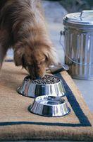 Mat casera plato de perro
