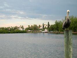 Retiro de alto nivel RV parques cerca de Tampa, Florida