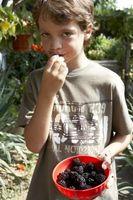 Healthy Snacks de verano para niños