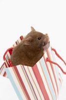 Casas hechas en casa para Hamsters