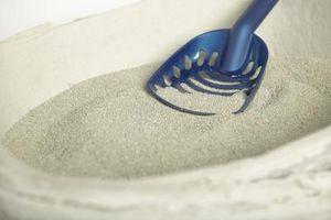Peligros de los de arena para gatos