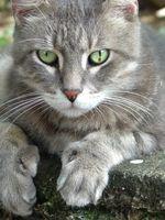Cómo utilizar la tilosina para la diarrea en los gatos
