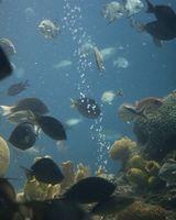 Cómo conseguir gusanos de cerdas provecho de sus acuarios marinos