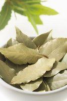 Forma de guardar hojas de laurel