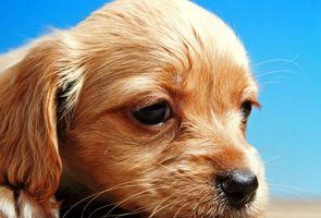 Los tumores del oído en los perros