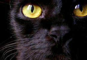 Metionina para infecciones del tracto urinario en los gatos