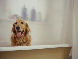 Cómo mantener a su apartamento de oler como perro