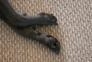 Los tumores del dedo del pie en los perros