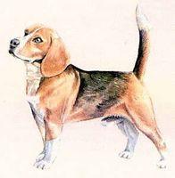 Cómo diagnosticar la enfermedad de Cushing en perros