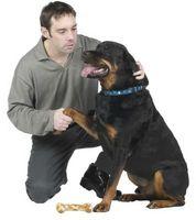 Cuáles son las causas de la pata de Licking en los perros?