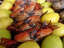 Lugares de cangrejo en Maryland