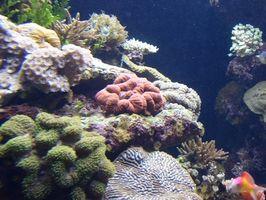 Identificación del acuario Coral