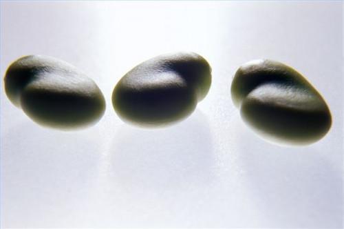 Cómo utilizar soja para Anti-Aging