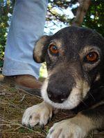Calmantes naturales para perros