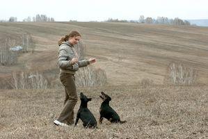 Picadura de la garrapata El tratamiento para perros