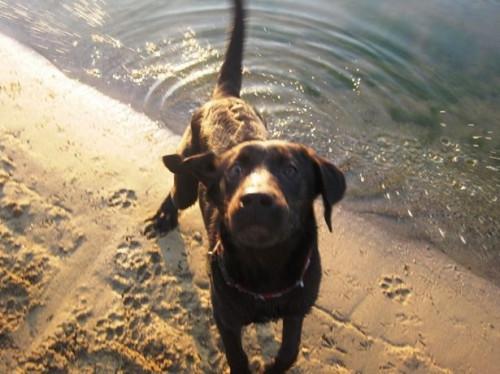 Lo que hace parecer de cáncer en los perros?