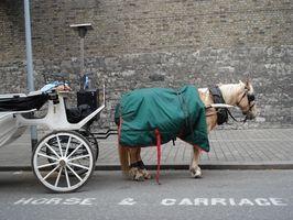Cómo conectar un caballo a un Buggy