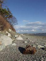 Qué hacer en Birch Bay, Washington