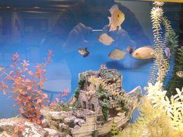 Cómo hacer un tanque de peces marinos en el hogar