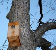 Cómo construir casas para los búhos del pájaro