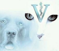 Pet Información Médica