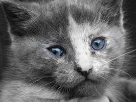 Cómo destetar material difícil de destetar a los gatitos