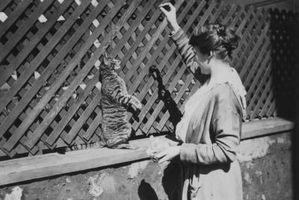 Cómo entrenar a los gatitos Himalaya