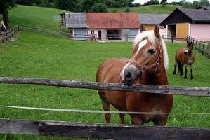 Regalos del caballo al por mayor