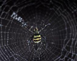 Arañas que se encuentran en Alabama