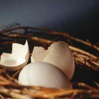 Los signos de una Cockatiel poner un huevo