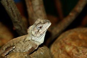 Cómo hacer planes de construcción de jaulas de los reptiles