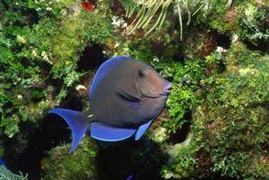 Lo que el pescado deberá ser Disponible en un lago para mantener las algas bajo control?