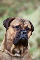 Los perros que se encuentran naturalmente en calma