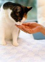 ¿Qué ocurrirá si un gato no come consistentemente?