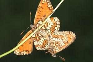 Las ideas de la magdalena de la mariposa