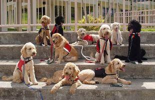 Cuál es el rango normal de los eritrocitos en los perros?