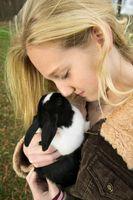 Cómo dar un Yucca cápsula a un conejo?
