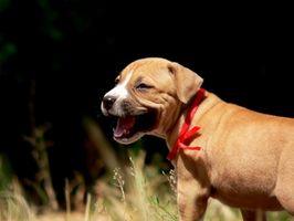 Cómo cuidar a un mes y un perrito viejo de la mitad