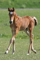 Tipos de entrenamiento de caballos