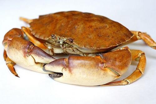 Ciclo de Vida de crustáceos