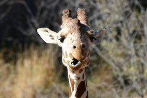 Parques Safari en el este de Texas