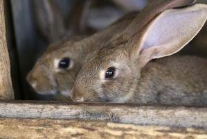 ¿Qué causa infecciones de ojo de conejo?