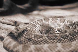 Cómo extraer veneno de serpiente
