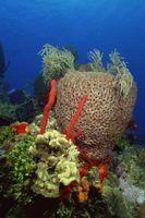 ¿Por qué son los arrecifes de coral Considerada la selva tropical del Océano?