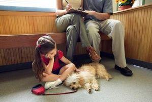 Cómo cuidar de un perro con gusanos de gancho