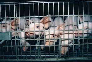 ¿Cuáles son los listones del cerdo?