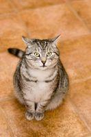 ¿Cómo hago para que mi gato para dejar de llamar a mi puerta?