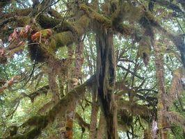 Los viajes de la selva tropical templada, cerca de Seattle, Washington
